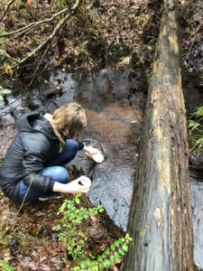 Aleah Walsh collects water samples from a stream in Sampson County